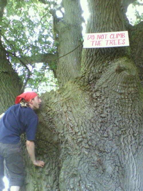 karim up a tree