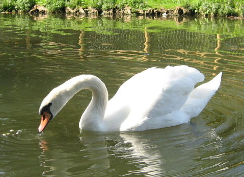 swanning around