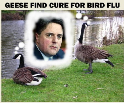 Geese find cure for bird flu