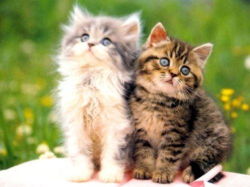 [Image: kucing2comel.jpg?maxWidth=800&maxHeight=600]