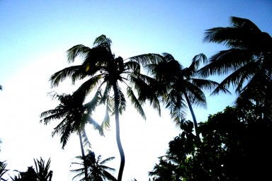 Palm trees in Zanzibar
