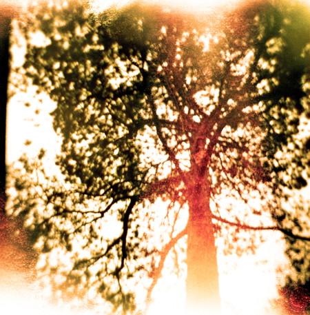 Belfast tree!