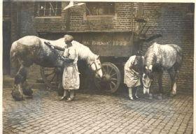 Railway horses being tended by volunteers