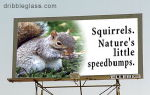 What are squirrels for?
