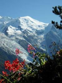 Flowers under the Mt Blanc