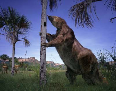 south american giant sloth