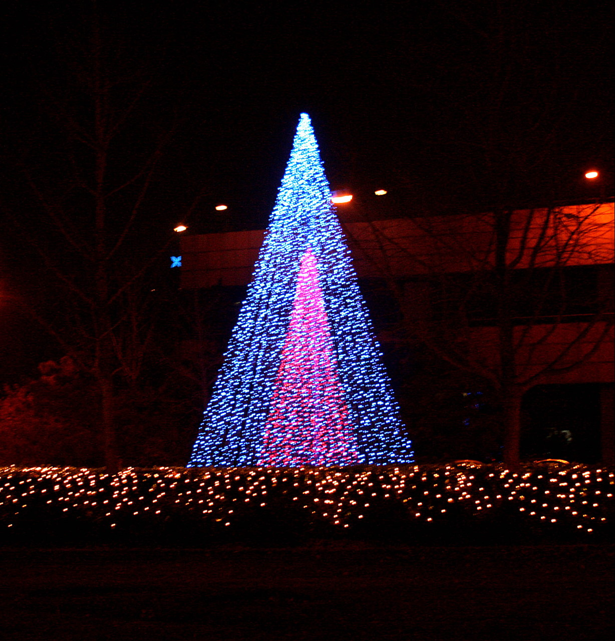tree of light