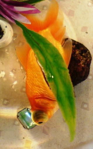 fish eye disease image search results
