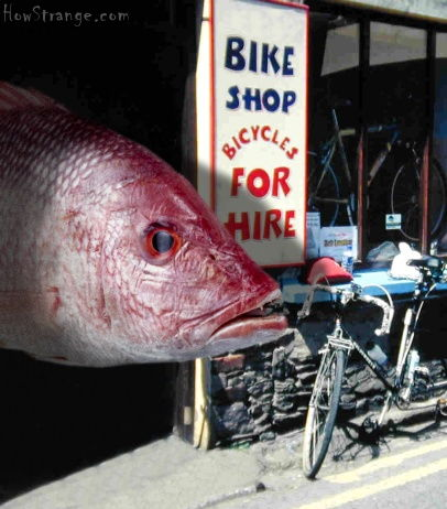 http://blogs.warwick.ac.uk/images/ihamptonsmall/2006/02/13/fish_bike.jpg