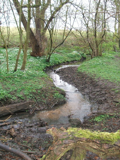 Berry Brook, Northycote Farm, Wolverhampton.