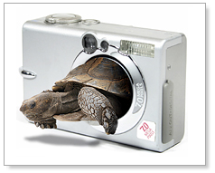 The tortoise and the camera