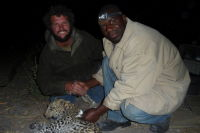 Success! Francois, the chief scientist, and Edmore, the vet, shake hands on completion of the first successful capture and radio collaring of a predator by our expedition. Now we retire a short distance and wait for her to recover so as not to risk her being attacked by other predators. All the time her mother watches...