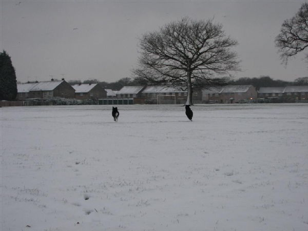 Dogs in the snow 3
