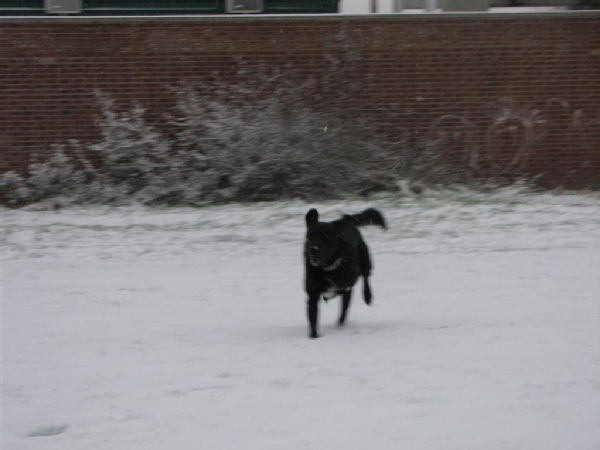 Dogs in the snow 6