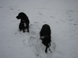Dogs in the snow 7
