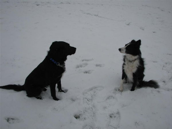 Dogs in the snow 8