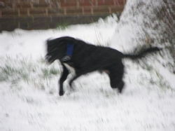 Dogs in the snow 9