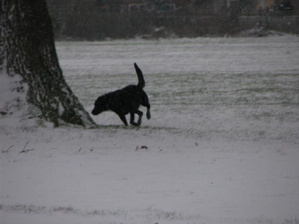 Dogs in the snow 1