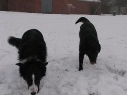 Dogs in the snow 2 4