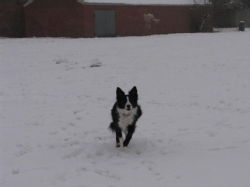 Dogs in the snow 2 1