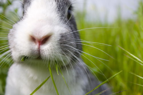 Photo of a rabbit edging close to the camera