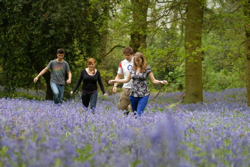 Image. Students walking through bluebells on the University of Warwick campus