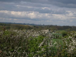Coventry Skyline from Leamington's Outskirts