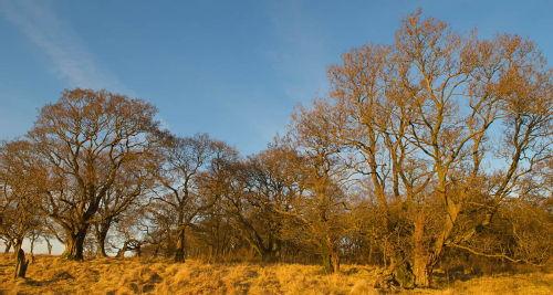 Bewcastle Woods