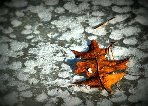 Snow leaf printing