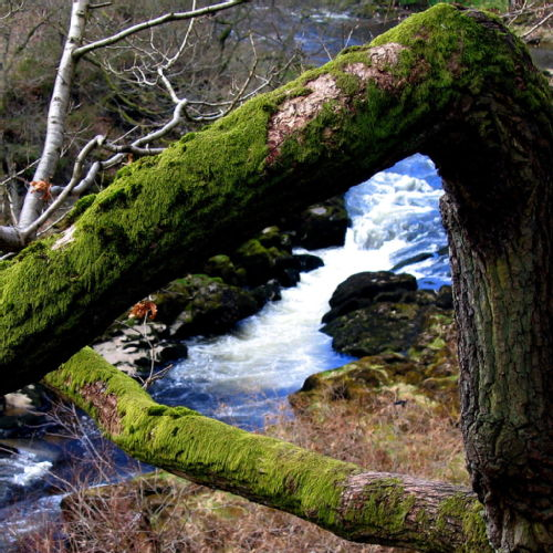 Impossible Triangle Strid Wood by Jim Moran
