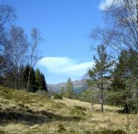 Balquhidder Woods