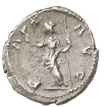 teritcus antonionianus