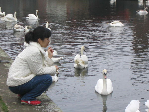 Dr Grace with swans