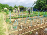 St Mary's Allotments 1