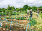 St Mary's Allotments 2