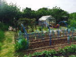 St Mary's Allotments 3