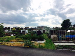 St Mary's Allotments 5