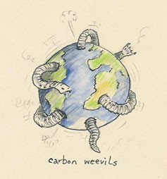 The Carbon Weevils