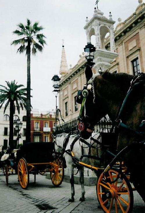 Horse drawn taxis in Seville
