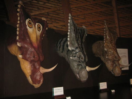 Caratopsidae