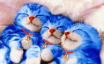 Blus Cats