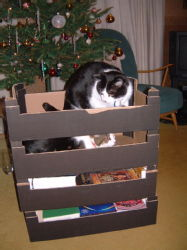 Boxed Cats