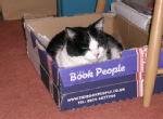 Boxed Moppet