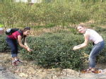 Emily and me picking tea