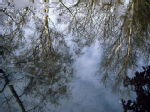 Reflections of Winter