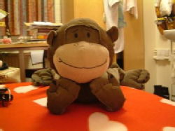 Monkey Lie on its front