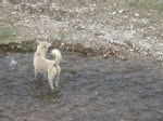 A radom dog in the river